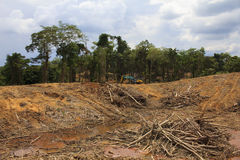 Deforestation environmental problem Stock Photo
