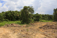Deforestation environmental problem Stock Photos