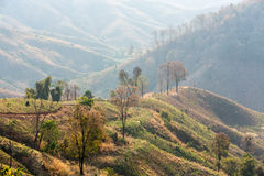 Deforestation and Farming Royalty Free Stock Image