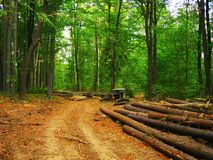 Deforestation, felled logs and a old bulldozer in the forest royalty free stock photos