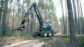 Deforestation, forest cutting concept. Pine forest with the trees getting chopped by the machine