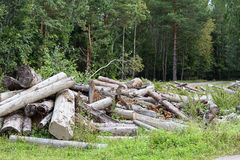 Deforestation Stock Image
