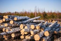 deforestation Fotoet av loggar in skogen fotografering för bildbyråer