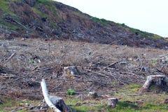 deforestation global värme Royaltyfri Foto