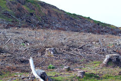 Deforestation. Global warming. Royalty Free Stock Photo