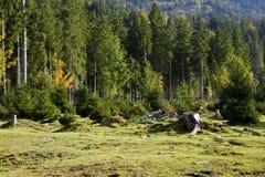 Deforestation i Alps royaltyfria foton