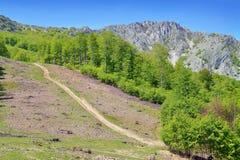 Deforestation. Illegal deforestation area in romania Stock Photos