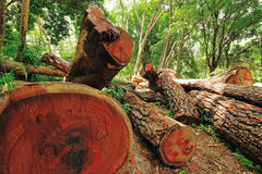 Deforestation. Illegal deforestation in the heart of the mountains, Thailand Stock Photography