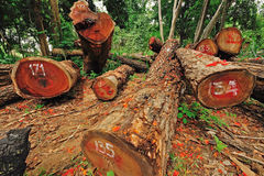 Deforestation. Illegal deforestation in the heart of the mountains, Thailand Stock Photo