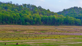 Deforestation. Image of contrast between forestation and deforestation Royalty Free Stock Photography