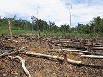 Free Deforestation In Area In Amazonian Jungle Stock Image - 147165921