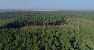 Deforestation on an industrial scale, logging aerial view, deforestation of the old pine forest