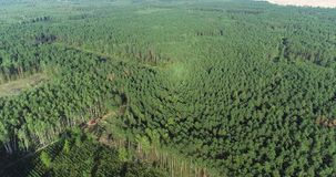Deforestation on an industrial scale, logging aerial view, deforestation with special equipment, deforestation of the