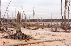 Deforestation. A lake and dead, fallen trees. Land that was once under water is now exposed Royalty Free Stock Photos
