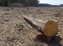 Deforestation Stock Photography