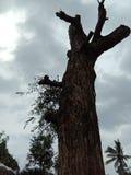 Deforestation leads world destroy. Deforestation leads end of world stock photography