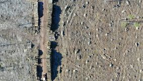 Deforestation, logging, environmental destruction. Aerial view from drone. Europe stock footage
