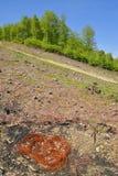 Deforestation. Massive deforestation area in the carpathians Royalty Free Stock Images
