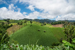 Deforestation on the mountain for agricultural at Tak province i Stock Photography