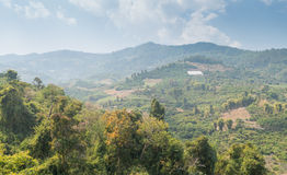 Deforestation on the mountain for agricultural in Thailand. Royalty Free Stock Image