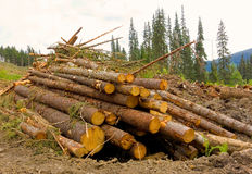 Deforestation in northern canada Royalty Free Stock Image