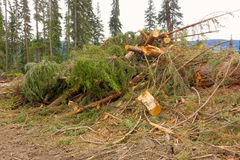 Deforestation in northern canada Royalty Free Stock Photography
