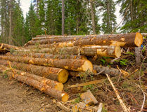 Deforestation in northern canada Stock Photo