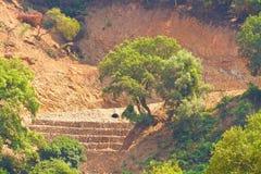 Deforestation och erosion arkivbilder