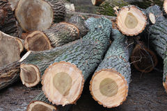Deforestation. Old rough wood.Wooden background. Tree texture. Tree background. Crack tree. Old tree. Old tree background. deforestation stock photography