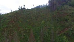deforestation Opinión aérea del abejón del bosque destruida en Ucrania almacen de metraje de vídeo