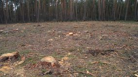 deforestation Pedaço de terra despido na floresta após árvores de corte vídeos de arquivo