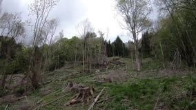 Deforestation of Pyrenean forest in France