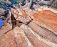 Deforestation Stock Image