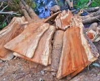 Deforestation Royalty Free Stock Photos