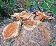 Deforestation Stock Photography