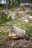 Deforestation in Romania Royalty Free Stock Photos