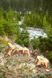 Deforestation in Romania Stock Photography