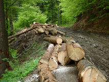 Deforestation in Romania 2015 Royalty Free Stock Photography