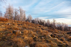 Deforestation in Romania Royalty Free Stock Photo