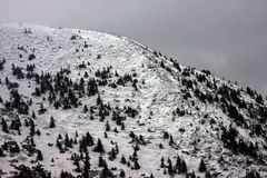 Deforestation in Romania in winter Royalty Free Stock Images