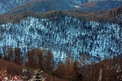 Deforestation in Romanian mountains Royalty Free Stock Image