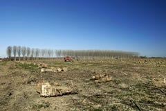 Deforestation. San Daniele Po Cr, Italy, deforestation of a poplar grove in the floodplain of the river Po Stock Images