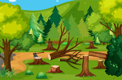 Deforestation scene with chopped woods Stock Photo