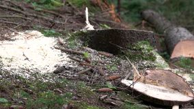 Deforestation scene with freshly cut wood logs.