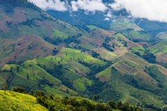 Deforestation for shifting cultivation. The bald mountain in Thailand Stock Photo