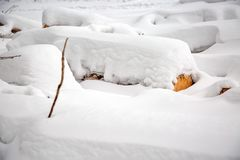 deforestation Skörda för bråte Loggar under snow Lagerföra av trä i skogvintersnödrivor royaltyfria bilder
