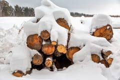 deforestation Skörda för bråte Loggar under snow Lagerföra av trä i skogvintersnödrivor royaltyfri fotografi