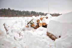 deforestation Skörda för bråte Loggar under snow Lagerföra av trä i skogvintersnödrivor arkivfoton