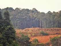 Deforestation. Soil laid bare after trees were cut down in the tropical rainforest at Kota Tinggi in Peninsular Malaysia Royalty Free Stock Image