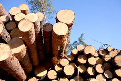 Deforestation after the squall Royalty Free Stock Image